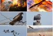 من المسؤول عن حرائق غابات استراليا؟ طائر الحدأة أم التغير المناخي