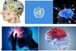 سبع تقتل الدماغ – بقلم الأستاذ الدكتور بشير جرار