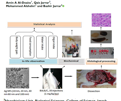 الأستاذ الدكتور بشير جرار ينشر بحثاُ حول التأثيرات التي تحدثها جسيمات الفضة النانوية في خلايا الكبد والكلية والخصية
